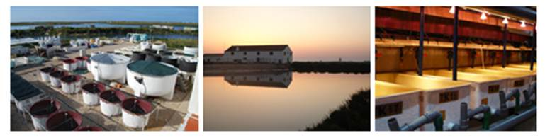 Imagen1_2_3_Portugal